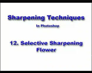 12 Selective Flower